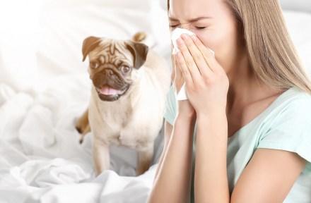 chienallergie-1400pxls
