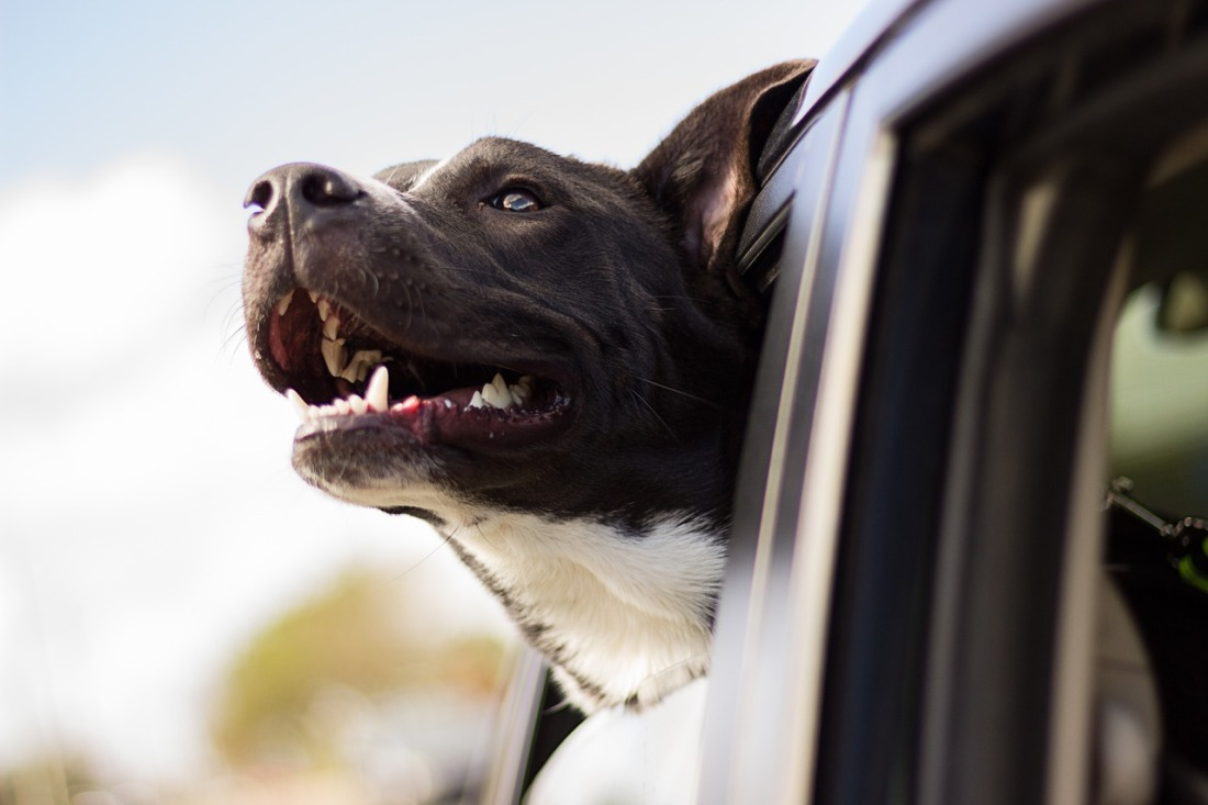 transporter-son-chien_pixabay